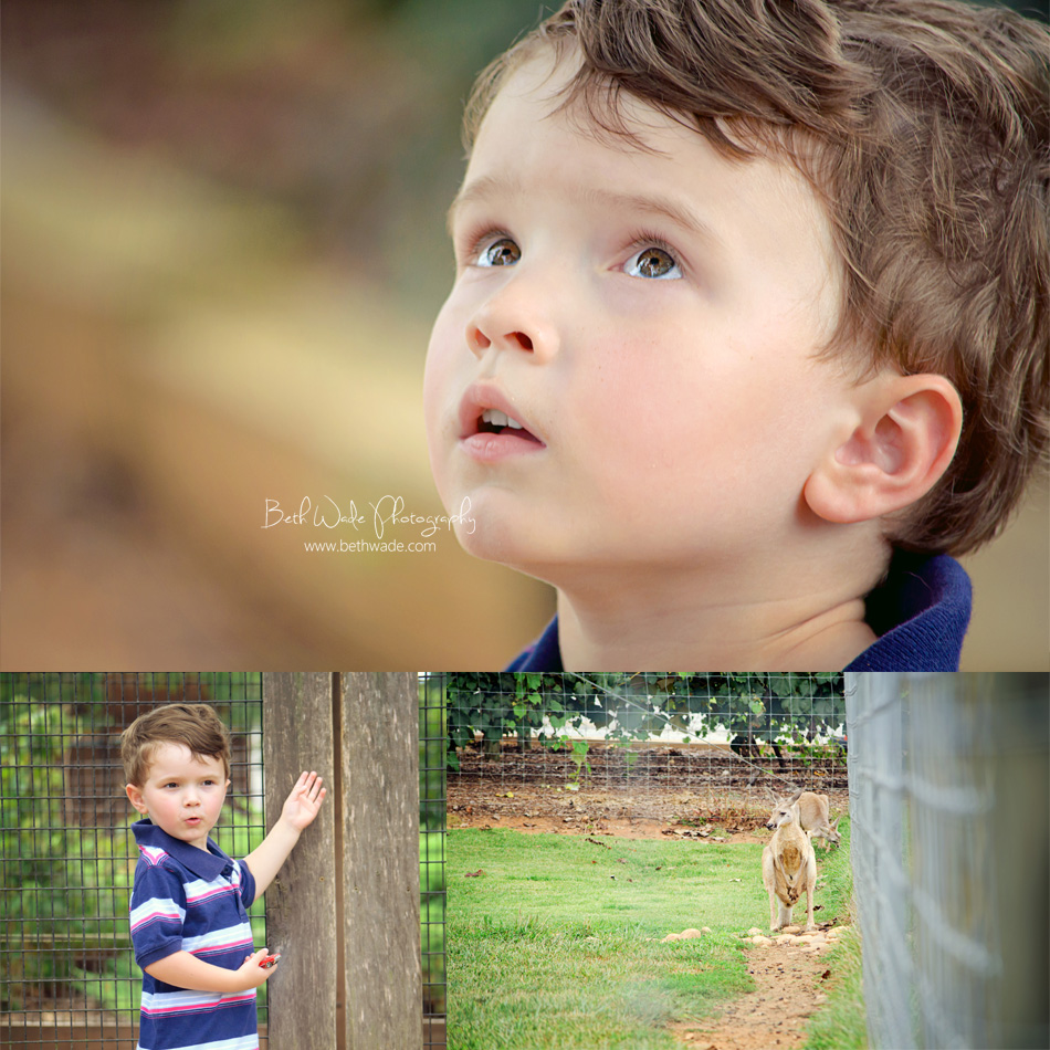 lazy 5 birthday photos - mooresville family photographer