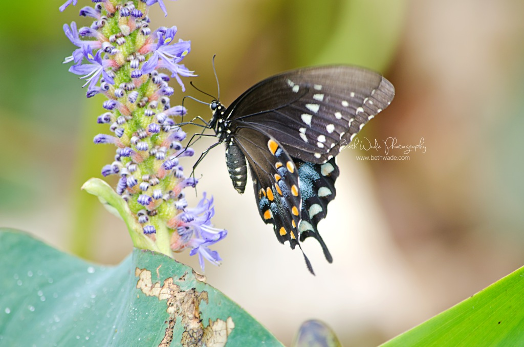 summer butterfly - macro photography