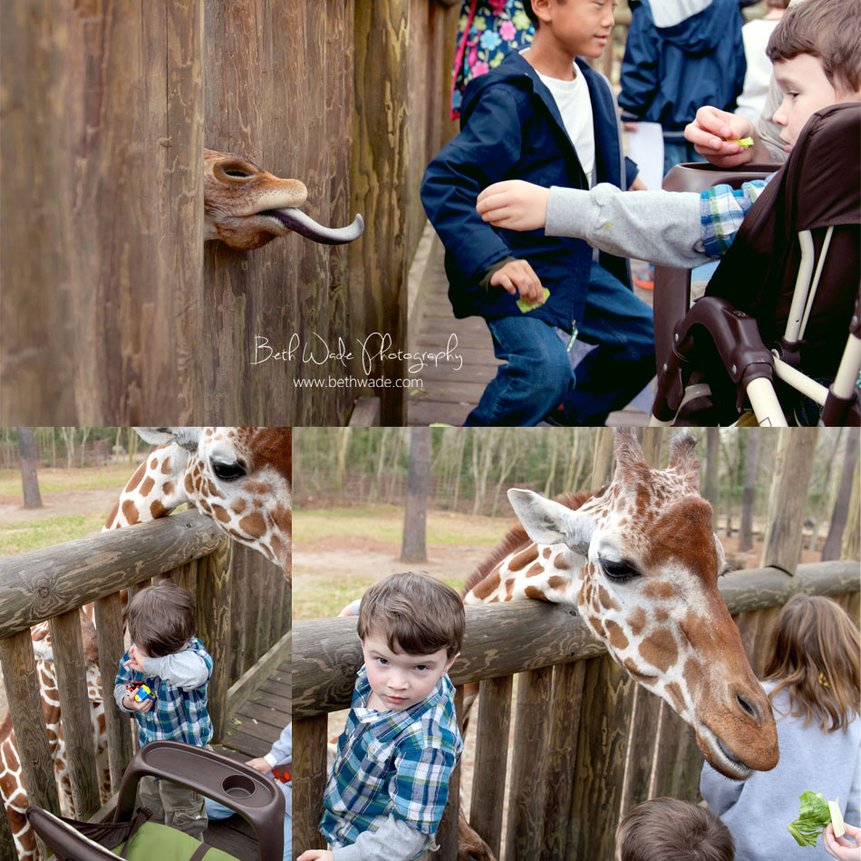 riverbanks zoo columbia sc - charlotte lifestyle photographer