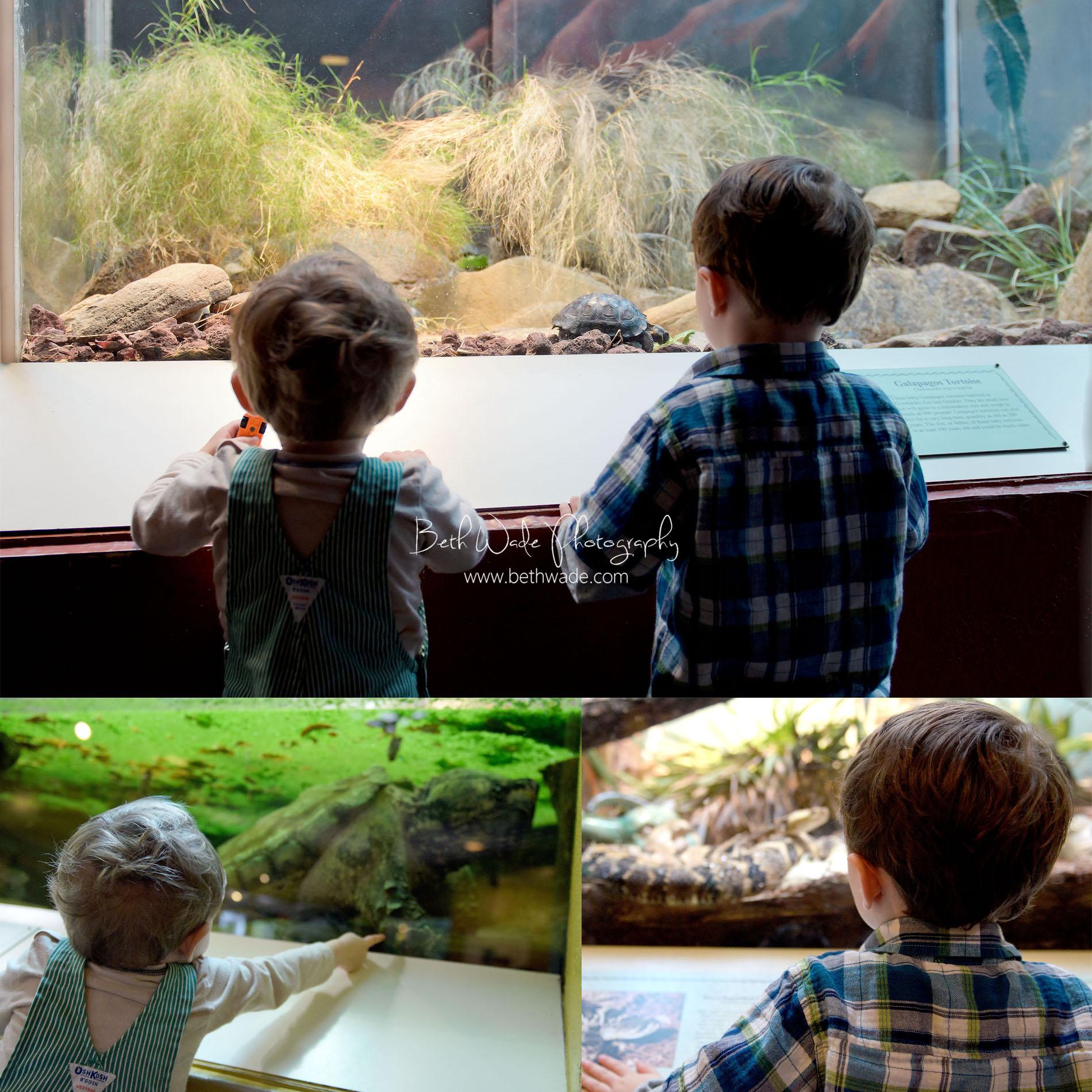 riverbanks zoo columbia sc - charlotte lifestyle photographer