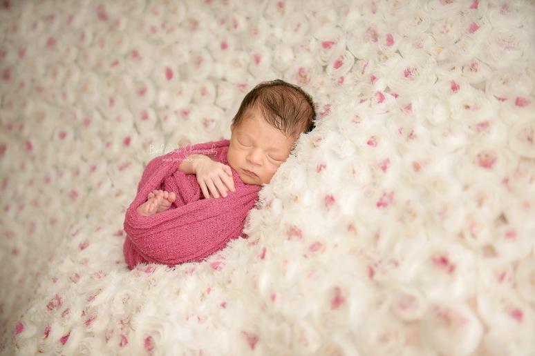 2 week old baby girl ~ family of 3 {charlotte newborn photographer}
